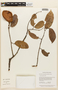 Macrolobium angustifolium (Benth.) R. S. Cowan, GUYANA, F