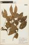 Macrolobium angustifolium (Benth.) R. S. Cowan, PERU, F