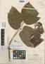 Bursera standleyana L. O. Williams & Cuatrec., COSTA RICA, P. H. Allen 5966, Isotype, F