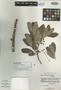 Bursera frenningae Correll, BAHAMAS, D. S. Correll 49984, Isotype, F