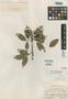Icica lucida Rose, COSTA RICA, A. Tonduz 11648, Isotype, F
