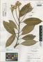 Capparis calciphila image
