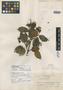 Viburnum amatenangense image