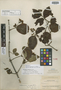 Viburnum costaricanum image