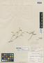 Cerastium dicrotrichum Fenzl ex Rohrb., BRAZIL, A. F. C. P. de Saint-Hilaire, Type [status unknown], F