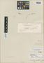 Cerastium montanum Gay, CHILE, C. Gay, Isotype, F