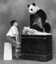 Boy with panda