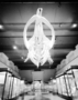 Right Whale skeleton