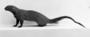 Egyptian Mongoose
