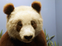 Su Lin, panda
