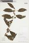 Cestrum microcalyx Francey, PERU, F