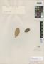 Licania compacta Fritsch, BRITISH GUIANA [Guyana], M. R.  Schomburgk 519, Isotype, F