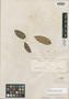 Licania rufescens Klotzsch ex Fritsch, BRITISH GUIANA [Guyana], Schomburgk 601, Isotype, F