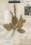 Clethra guadalajarensis Briq., Mexico, C. G. Pringle 2502, Isotype, F