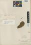 Clethra guianensis Klotzsch ex Meisn., BRITISH GUIANA [Guyana], M. R.  Schomburgk 956, Isotype, F