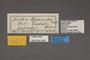 95488 Arctia quenselii gelida T labels IN