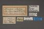 95479 Erebia sofia HT labels IN