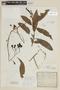 Solanum aligerum Schltdl., ARGENTINA, F