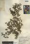 Trianthema portulacastrum L., Guatemala, J. A. Steyermark 37772, F