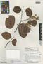 Pakaraimaea dipterocarpacea Maguire & Ashton, GUYANA, B. Maguire 32185, Isotype, F
