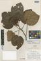 Petenaea cordata Lundell, GUATEMALA, C. L. Lundell 17279, Isotype, F