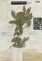 Sloanea monosperma Vell., BRAZIL, C. F. P. Martius 831, Isotype, F