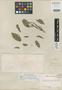 Sloanea monosperma Vell., BRAZIL, C. F. P. Martius 831, Type [status unknown], F