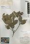 Sloanea picapica var. hirsuta Earle Sm., BRAZIL, A. C. Smith 2981, Isotype, F