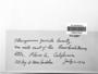 Nogopterium gracile image