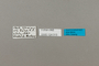 124013 Speyeria aphrodite labels IN