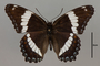 124016 Limenitis arthemis d IN