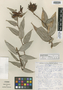Cavendishia atroviolacea Luteyn, PANAMA, J. L. Luteyn 3045, Isotype, F