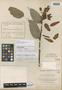 Cavendishia longiflora Donn. Sm., COSTA RICA, A. Tonduz 7391, Isotype, F