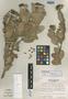 Cavendishia talamancensis Luteyn, COSTA RICA, R. L. Wilbur 16178, Isotype, F