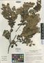 Disterigma utleyorum Wilbur & Luteyn, COSTA RICA, R. L. Wilbur 21706, Isotype, F