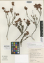 Erica orculiflora Dulfer, South Africa, E. E. Esterhuysen 28909, Isotype, F