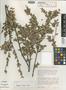 Gonocalyx almedae Luteyn, COSTA RICA, F. Almeda 2673, Isotype, F