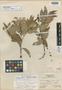 Leucothoe pinetorum Standl. & L. O. Williams, HONDURAS, L. O. Williams 14000, Isotype, F