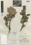 Vaccinium hondurense A. C. Sm., HONDURAS, L. O. Williams 18567, Isotype, F