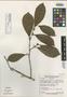 Casearia bahiensis Sleumer, BRAZIL, N. T. da Silva 58418, Isotype, F