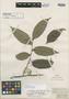 Casearia laurifolia Benth., BRITISH GUIANA [Guyana], R. H. Schomburgk 342, Isosyntype, F