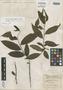 Xylosma sanctae-annae Sleumer, Trinidad and Tobago, W. E. Broadway 6320, Isotype, F