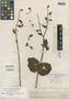 Lisianthius schomburgkii Griseb., BRITISH GUIANA [Guyana], Schomburgk 298, Isotype, F