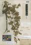 Geranium herrerae image