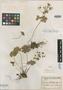 Geranium sintensii Freyn, ARMENIA, J. F. Freyn 7050, Type [status unknown], F