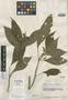 Besleria ornata C. V. Morton, VENEZUELA, J. A. Steyermark 56716, Holotype, F