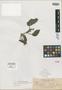 Rhynchoglossum spumosum Elmer, PHILIPPINES, A. D. E. Elmer 9929, Isotype, F