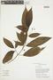 Clidemia japurensis DC., GUYANA, F