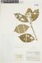 Conostegia montana (Sw.) D. Don ex DC., COLOMBIA, F