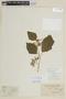 Solanum torvum Sw., BRITISH GUIANA [Guyana], F